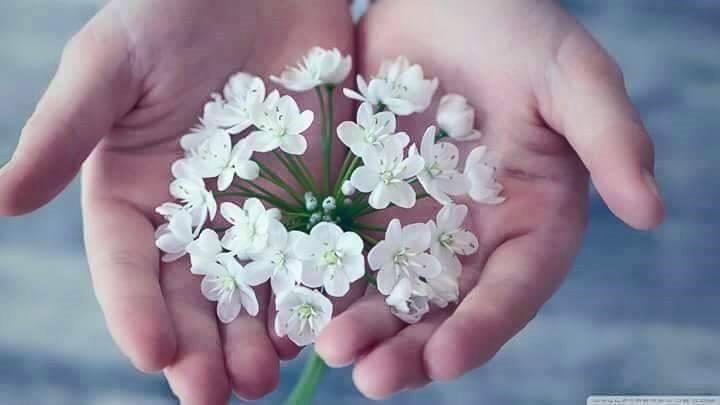 The Healing Art of Forgiveness